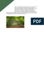 Febre Zica Virus.docx