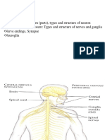7 Nervous System123