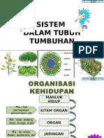 struktur-tumbuhan