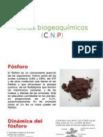Ciclos-biogeoquímicos-CNP