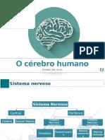 o cérebro.pptx