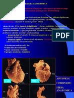 Cv - Curs 5 - Cardiopatia Ischemica