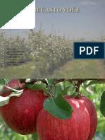Jabučasto-voće-5.pdf