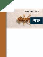Plecoptera.pdf