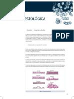 Manual CTO - Anatomia Patológica