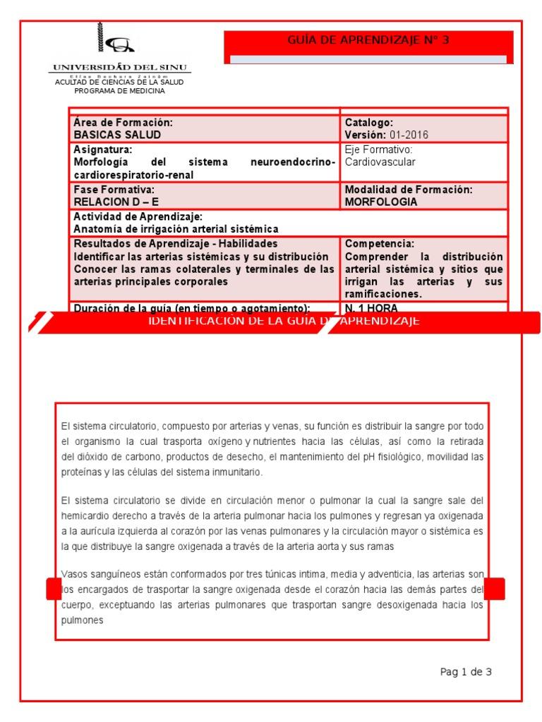 Famoso Anatomía De Aprendizaje Molde - Imágenes de Anatomía Humana ...