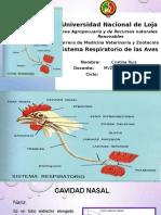 CRISTINA RUIZ-3B-Sistema Respiratorio de las Aves.pptx