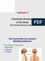 Lecture 3 - Functional Divisions of the Brain_2