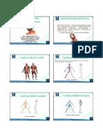 Curso Cadeias Musculares Ead Cefac- Aula 1