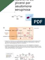 Metabolismo Del Glicerol Por Pseudomona Aeruginosa