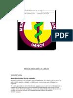 musculos-de-cara-y-cabeza-resumen-de-anatomia.docx