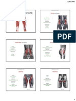Muscles of the Lower Limb (ADAM).pdf