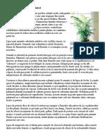 Deficienta de Minerale La Palmieri