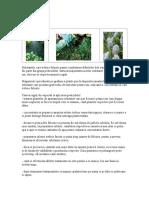 PesticideLe