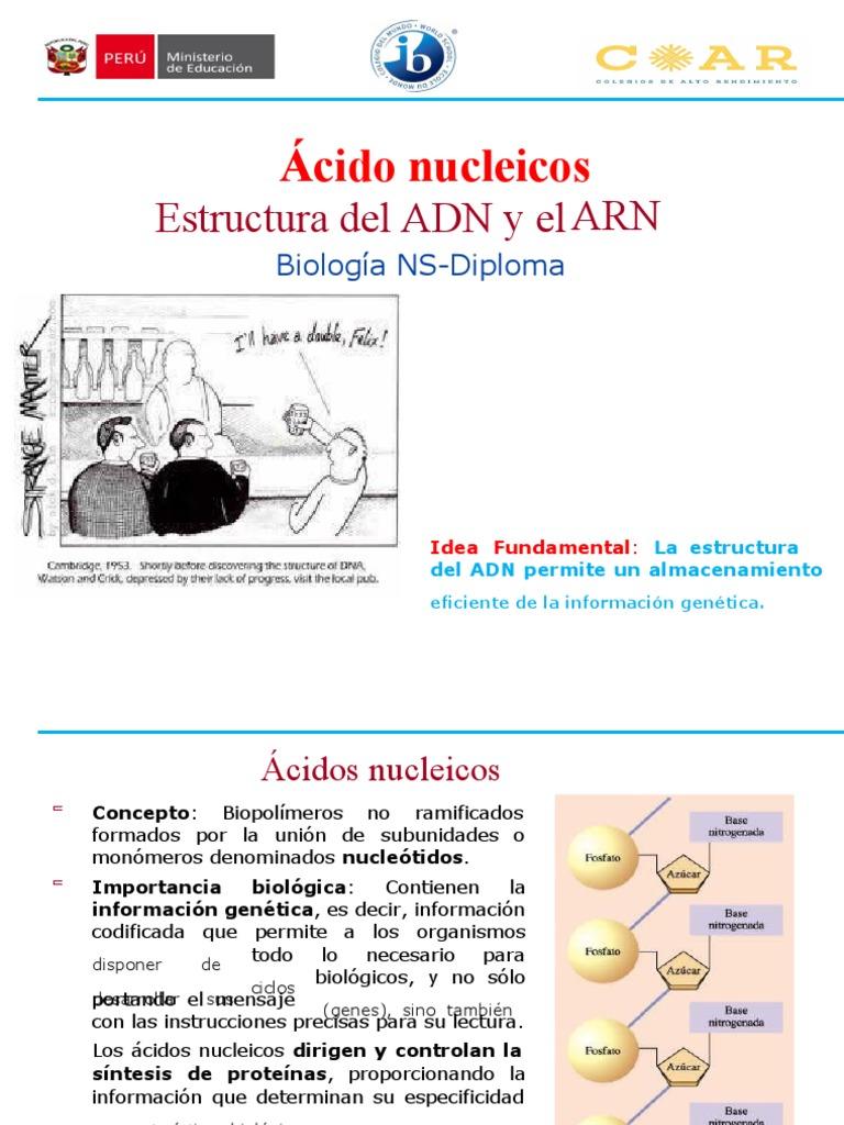 ADN - ARN 1