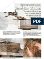 Transplante Kimura Bonsai Pasión nº50