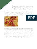 Ks Mikrobiologi e Coli