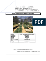 Proyecto Gladiola Pilcaya