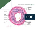 Histology of Appendix
