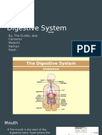 copy of digestive system project  1