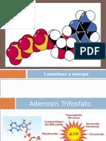 Glicolisi, Ciclo de Krebs, Cadena Transportadora de Electrones y Fosforilación Oxidativa