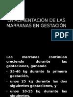 ALIMENTACION-MARRANAS