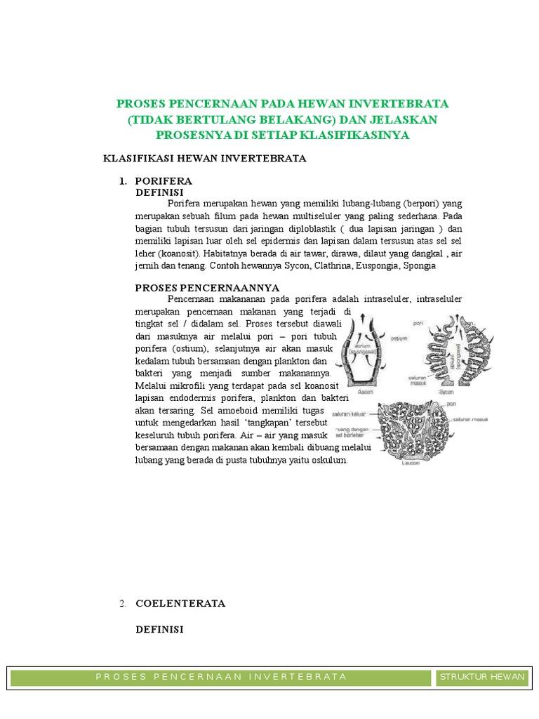 Proses Pencernaan Beberapa Hewan Invertebrata Edit