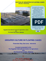 Commercial Cage Farming of Grouper in Indonesia