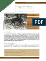 jaguatirica.pdf