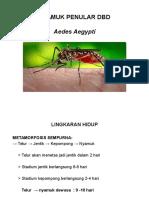 Nyamuk Penular Dbd