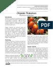 Organic Tomatoes Kentucky
