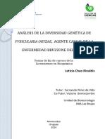 Pyricularia Oryzae en Arroz