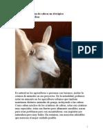 Selección y crianza de cabras en el trópico