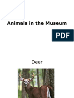 Animals in the Museum and Their Characteristics