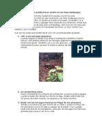 Galápagos Guía de Viaje