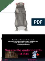 Desarrollo embrionario de la rata