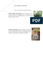 Flora de Guatemala en Peligro de Extinción