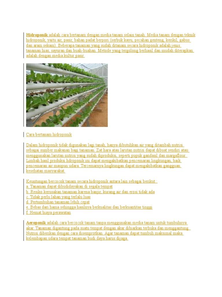 Hidroponik Adalah Cara Bertanam Dengan Media Tanam Selain Tanah Pupuk Tabah Organik