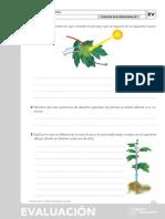 cono ev 1.pdf