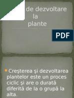 Ciclul de Dezvoltare plante