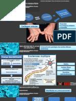 Artrite Reumatóide Esclerose Múltipla Placas Imunodeficiência