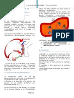 2. Glandula Tiroides y Paratiroides