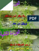 10 Flowers