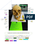 Craneo 3 PDF