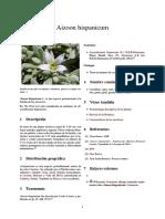 Aizoon hispanicum