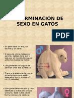 determinacion-de-sexo-en-gatos-y-cobayos.pptx