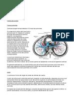 Apuntes de Anatomía Arteriovenosa