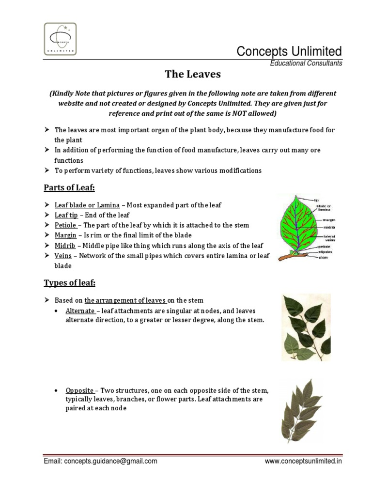 the leaves plant stem horticulture and gardening