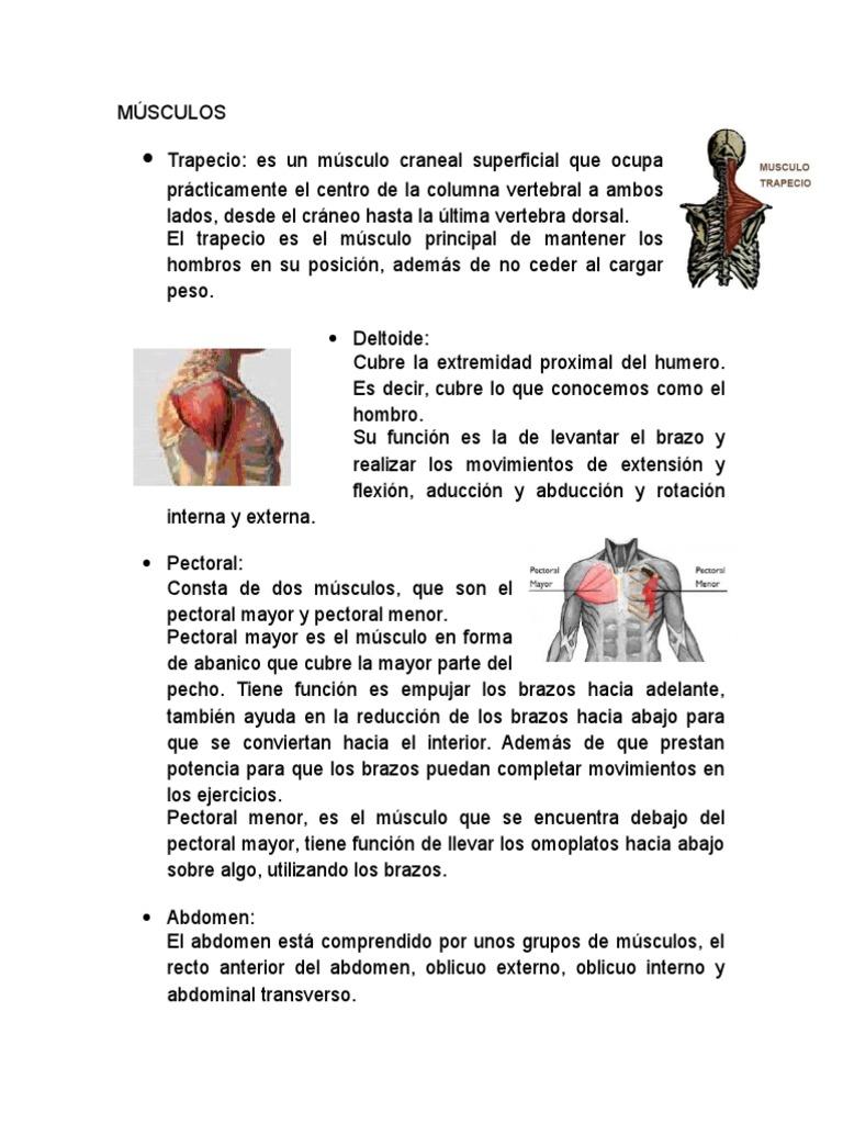 MÚSCULOS y Lesiones Fitness