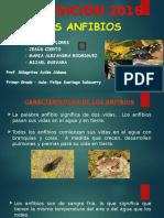 Exposicion 2016 - Los Anfibios